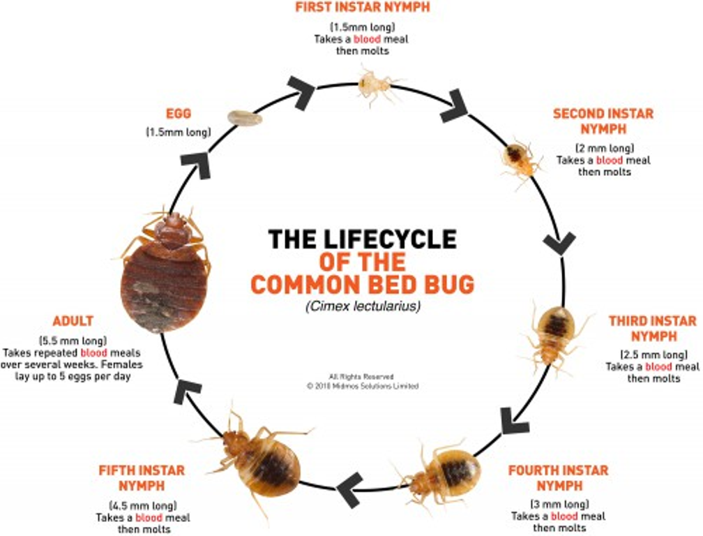 Can Bed Bugs Be Gotten Rid Of
